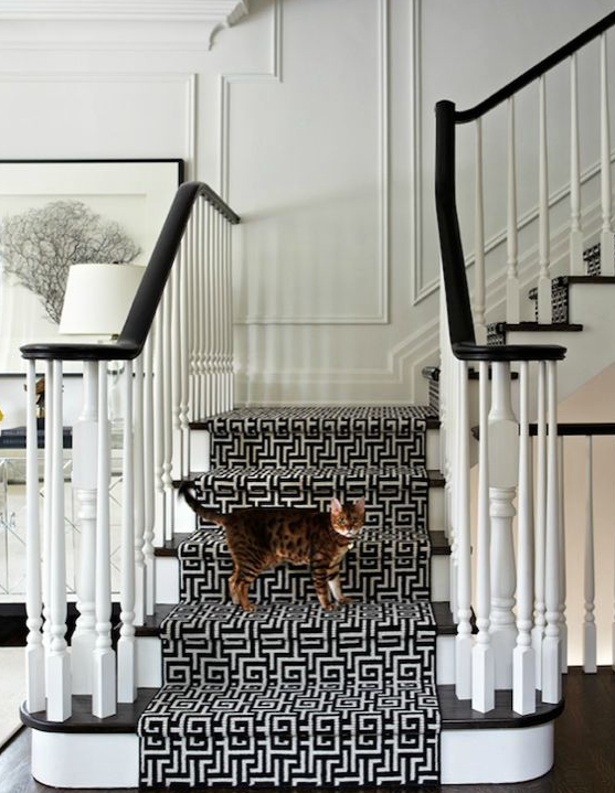 Cat on Black and White stair runner
